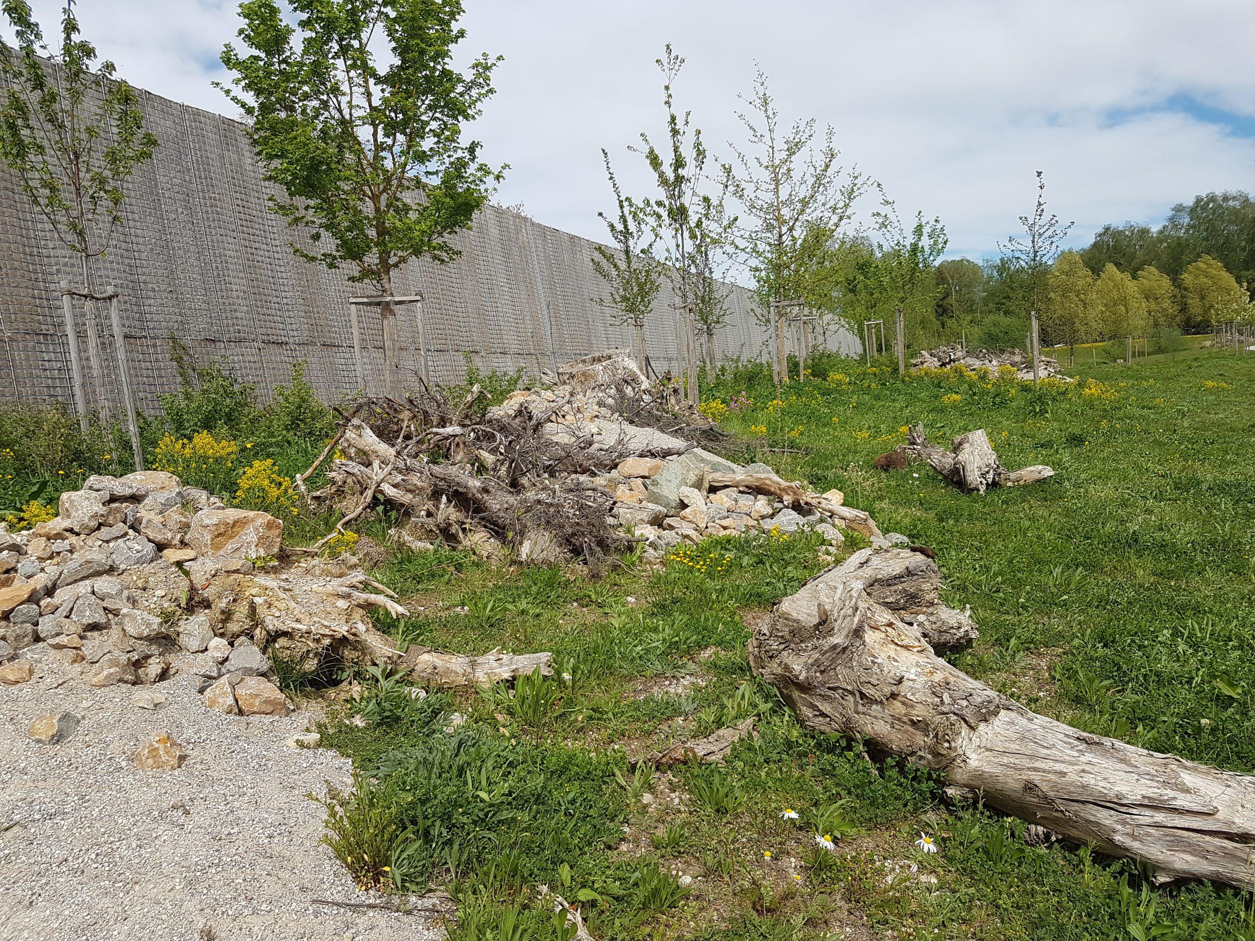 Habitatstrukturen Zauneidechsen vor Lärmschutzwand