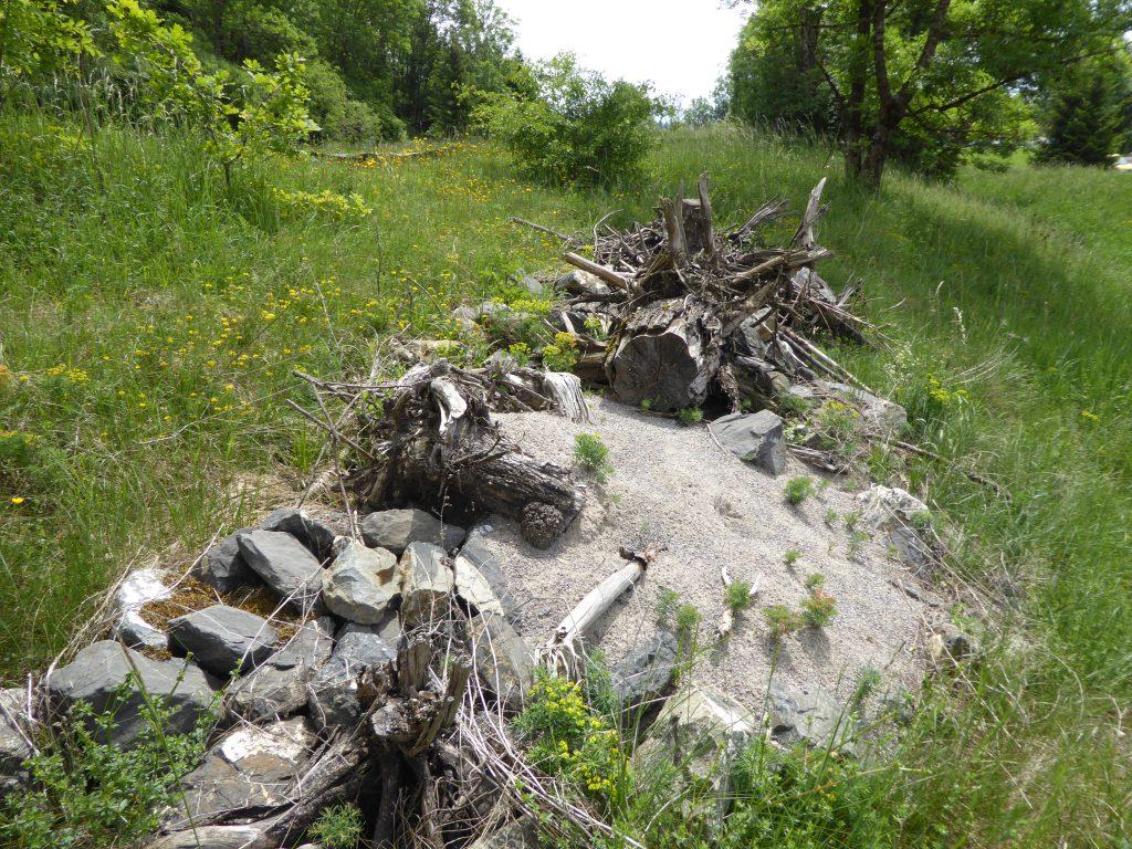 Habitatstruktur Zauneidechsen