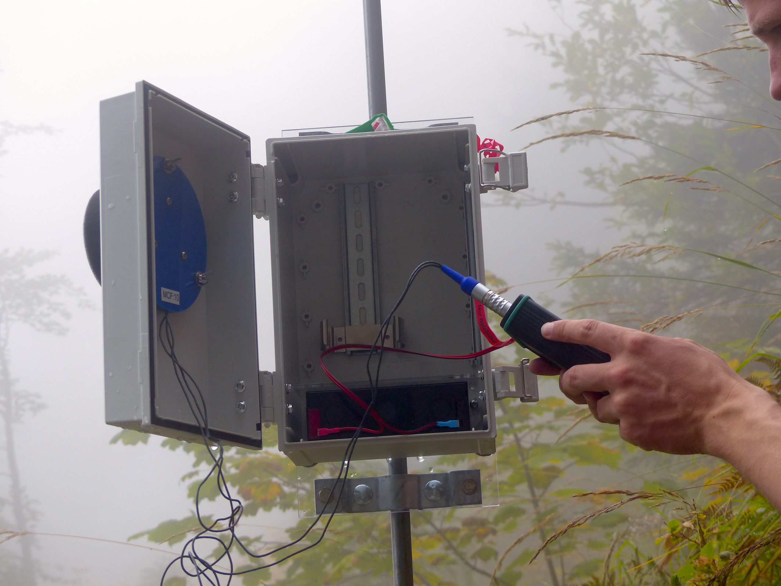Batcorder mit Waldbox