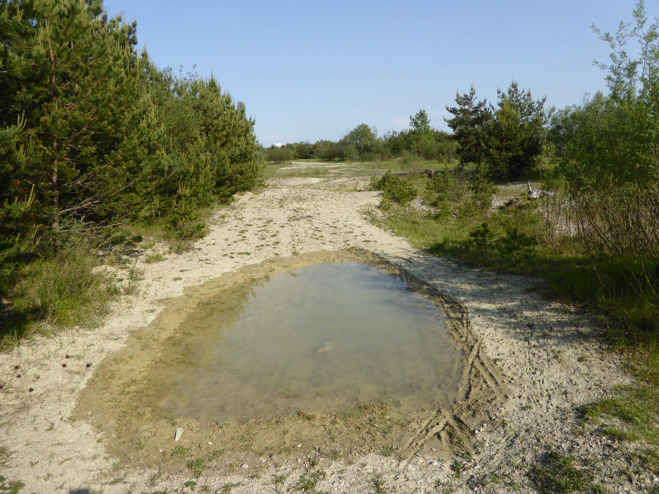 Temporärgewässer für Amphibien