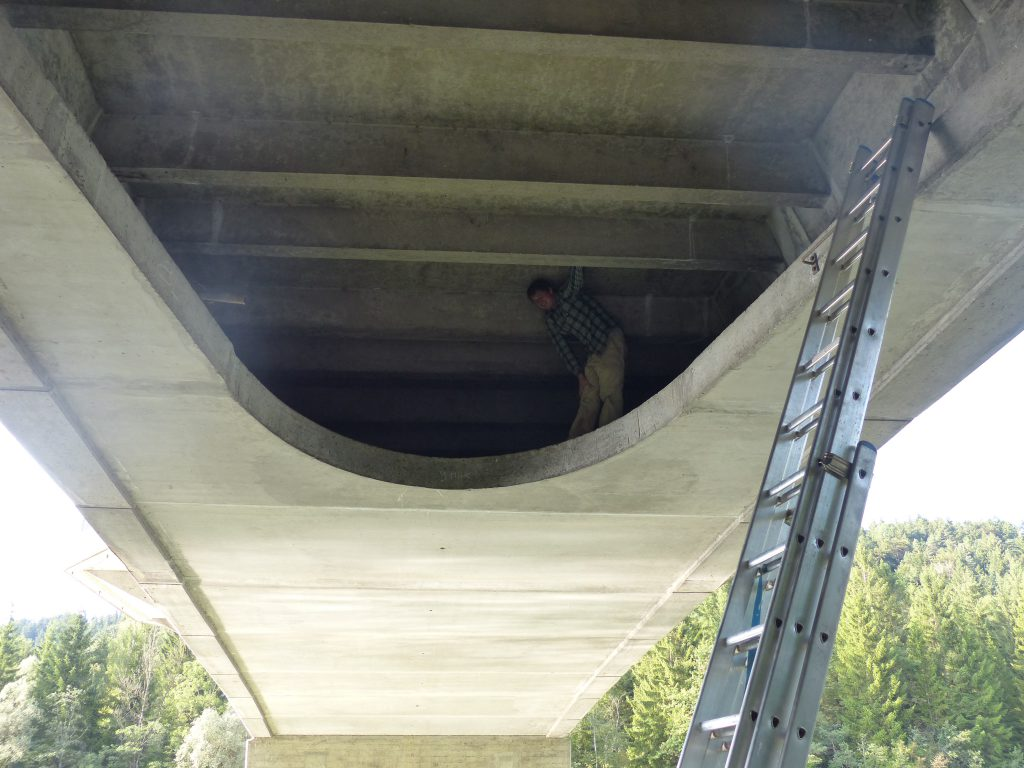 Quartierkontrolle Fledermäuse Landsberg Brücke