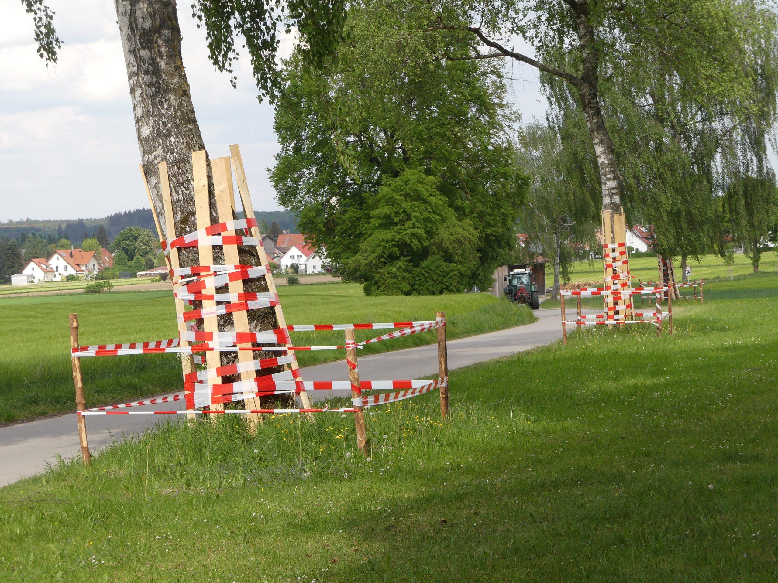 Baumschutzmaßnahmen