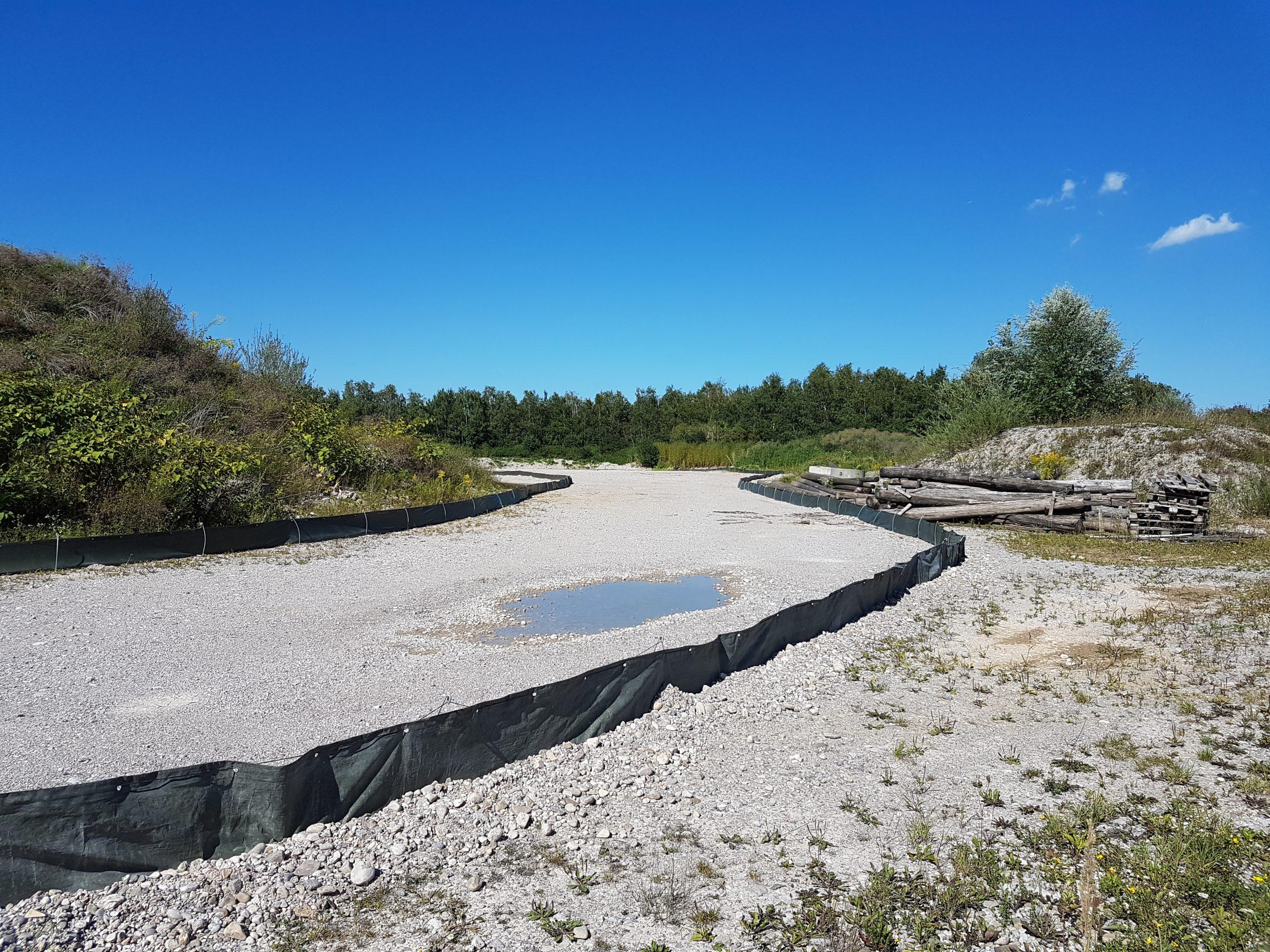 Amphibien und Reptilien Artenschutzmaßnahmen München