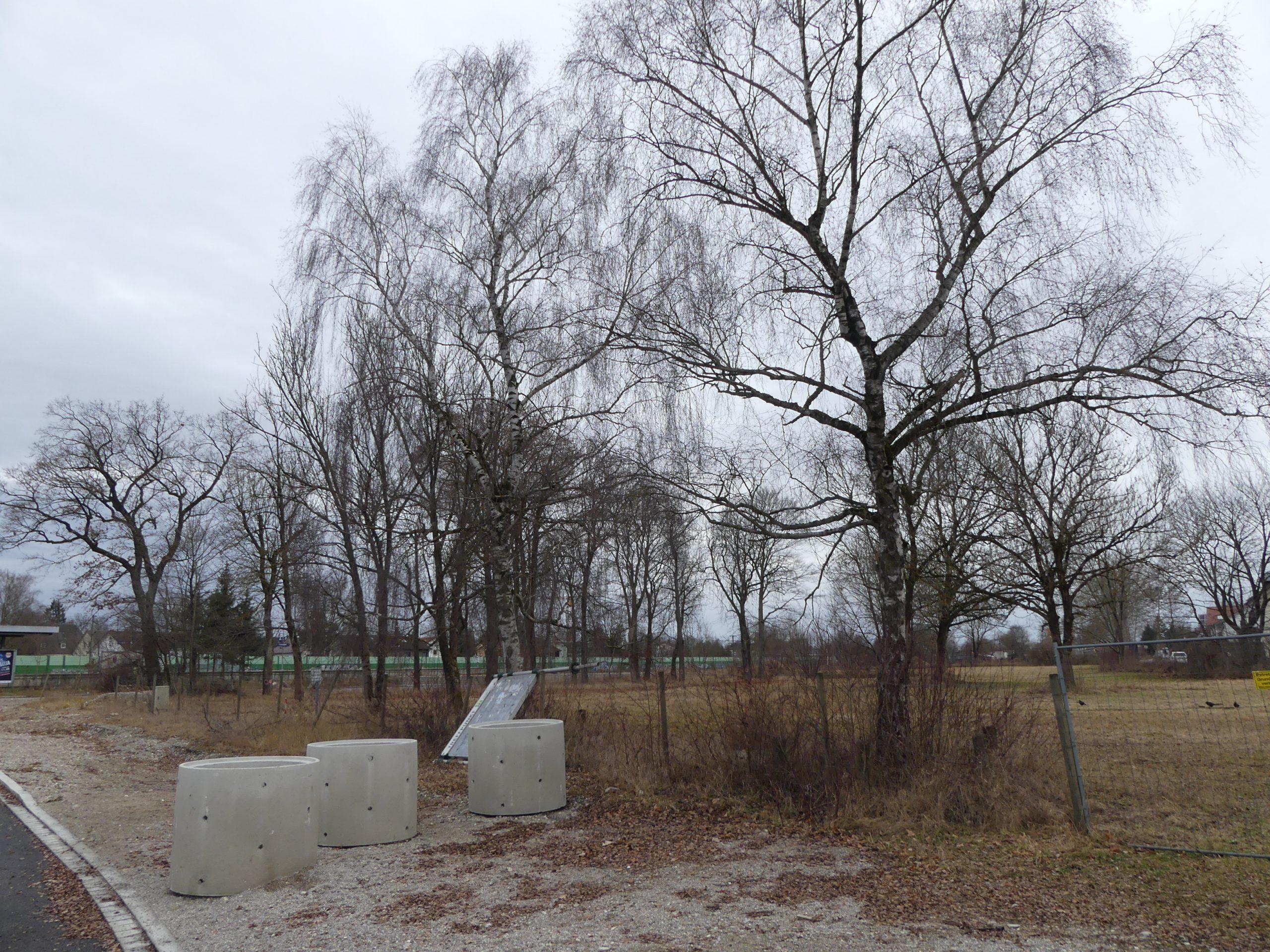 Faunistische Kartierung Baumbestand München