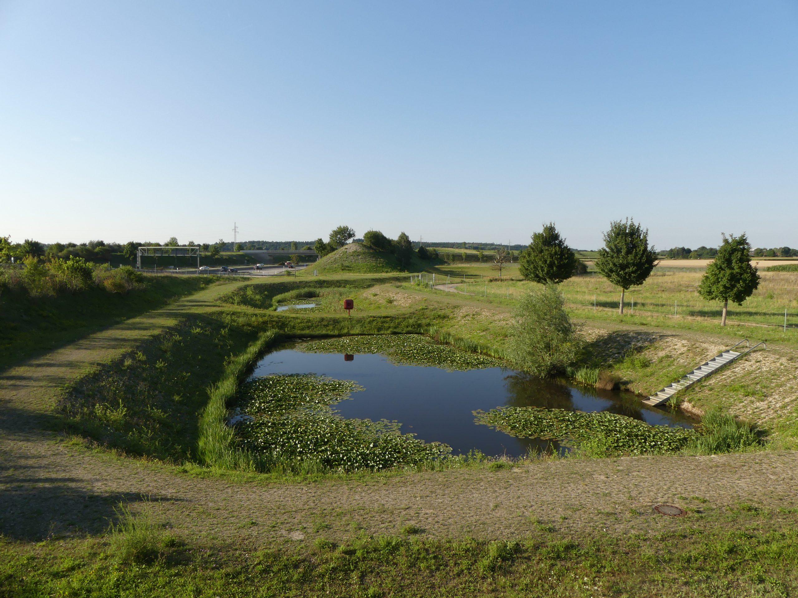 Rückhaltebecken Autobahn Amphibienkartierung München