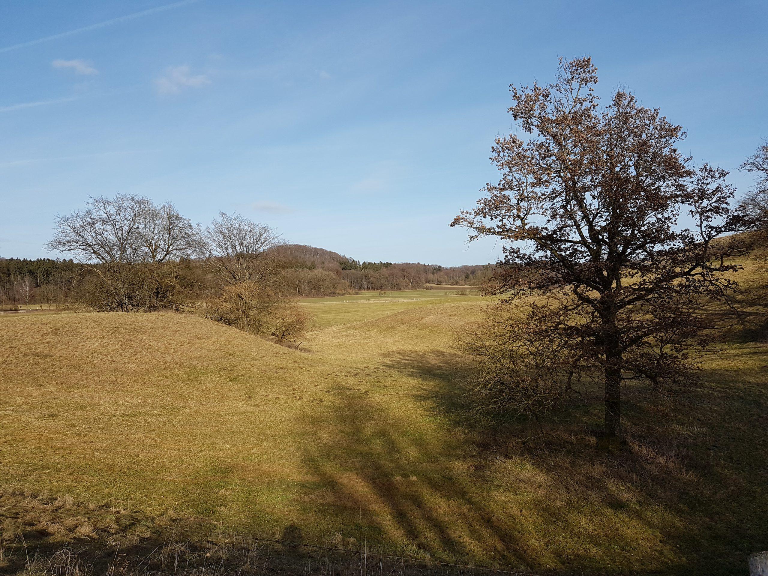 Artenschutzgutachten Landkreis München Hildenbrand