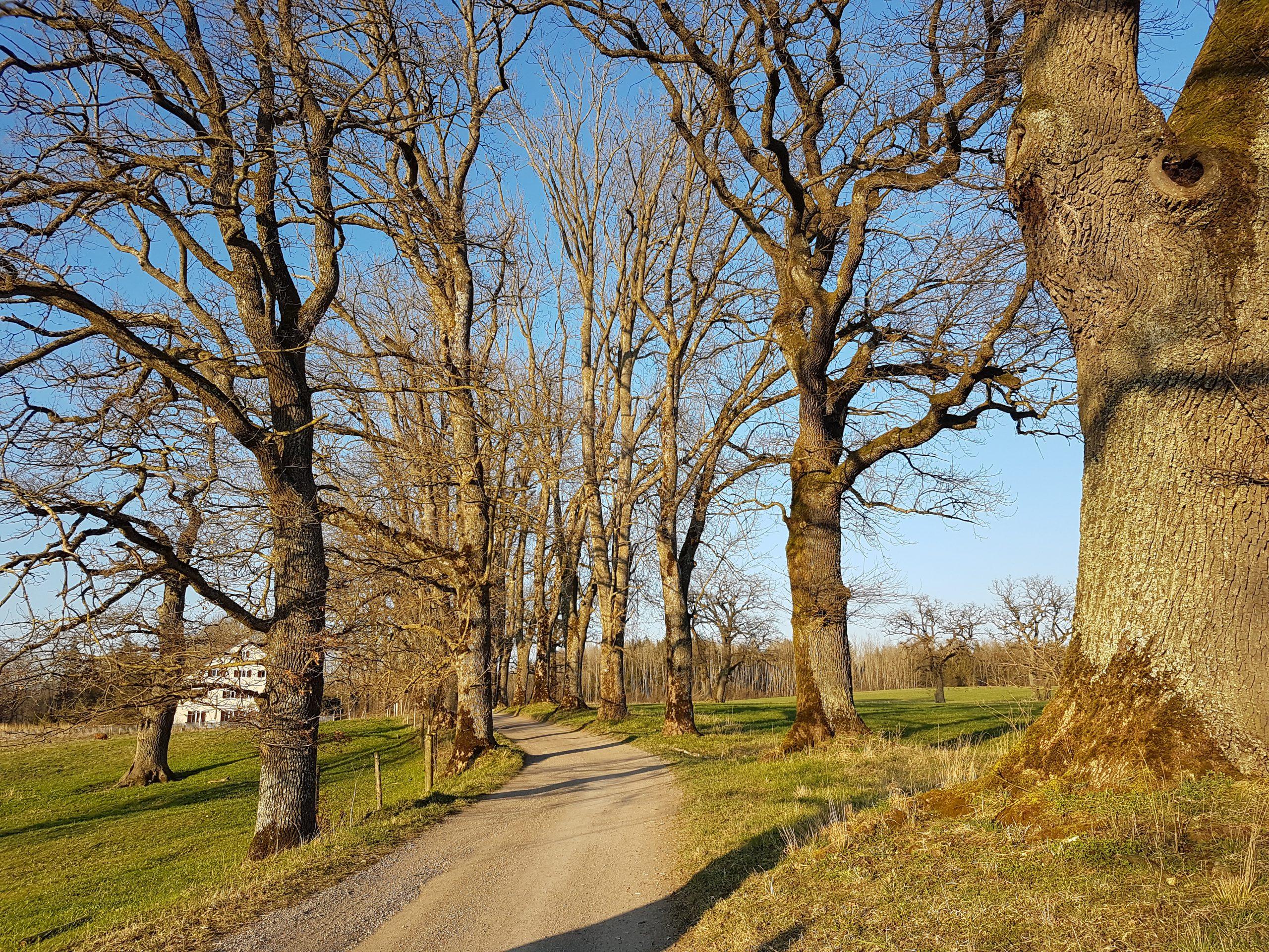 Artenschutzgutachten Landkreis Starnberg Hildenbrand