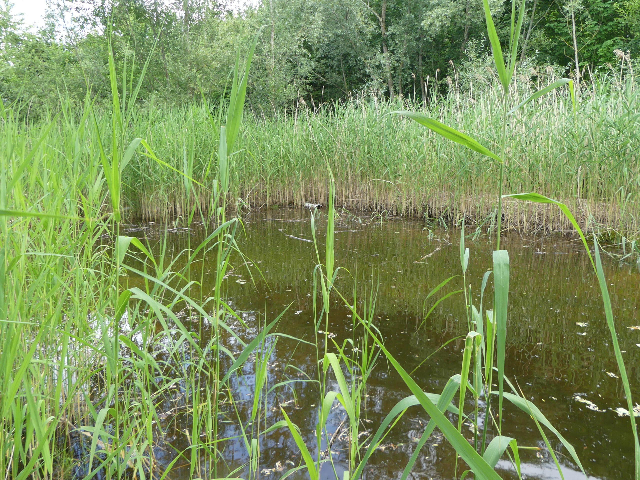Amphibienkartierung