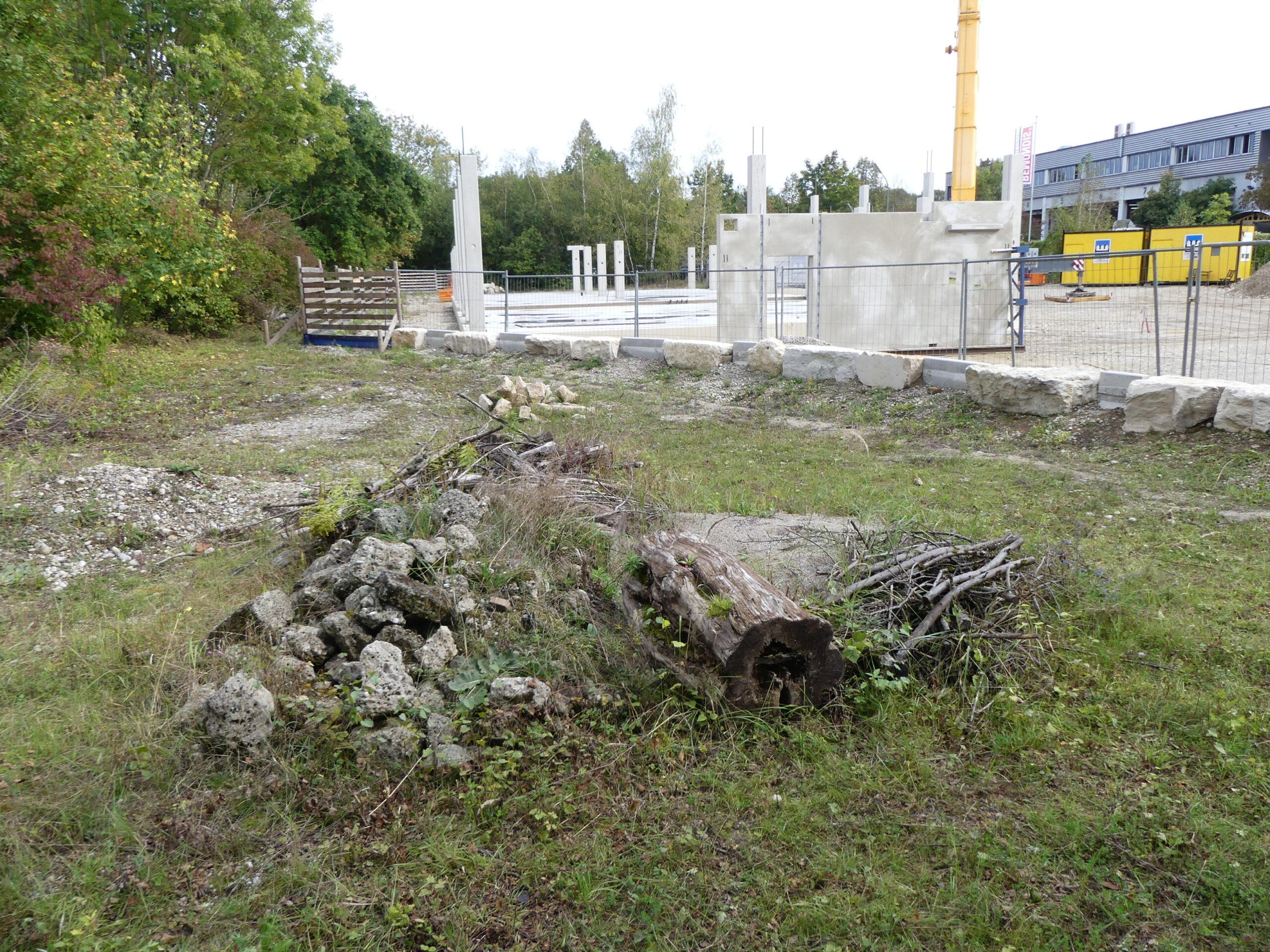 Zauneidechsen-Habitatstruktur vor Baustelle